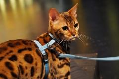 Inspelning för Katt& Company!