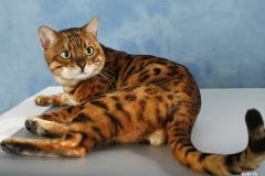 E leopardettes lux of lama7283