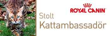 RCkattambassador-350x115pxmarscops